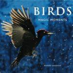 Birds Magic Moments